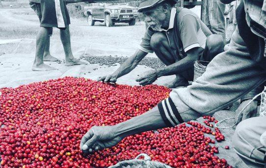 Crimson fruit